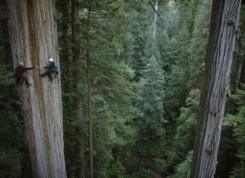 3EF6F9E400000578-4382318-Wood_you_Two_climbers_clamber_up_a_breathtaking_750_year_old_seq-a-12_1491576987736